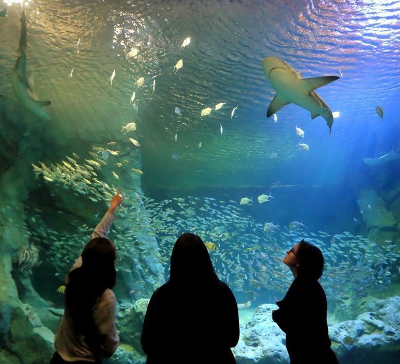 St Louis Aquarium - American Spinal Injury Association